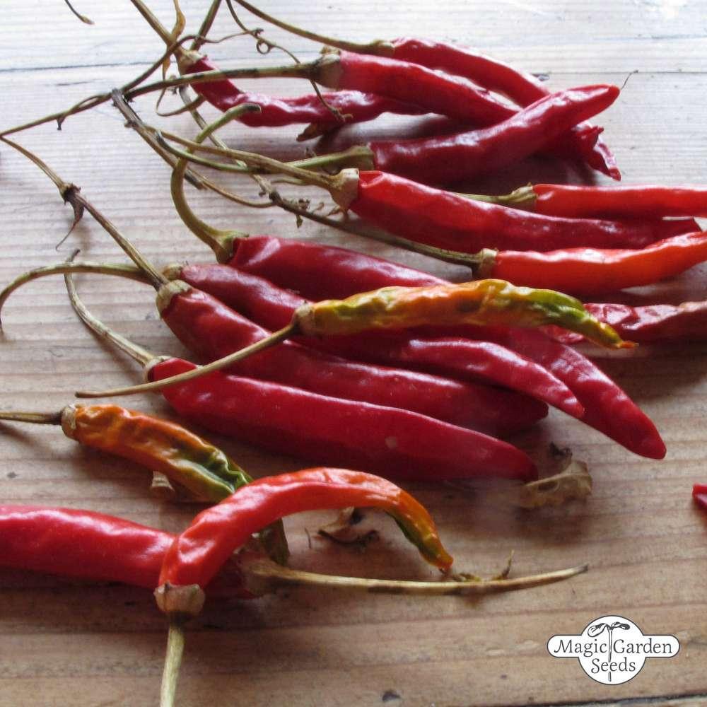 30 Samen Thai Chili Thaichili Schärfe 8 bis 9